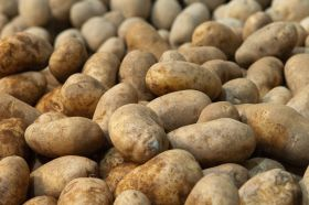 Port Said delays trouble Pakistani potatoes