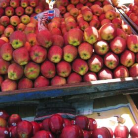 Slow sales spoil India apple market
