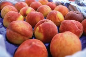 Australian stonefruit exports hit 10-year high