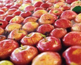 Taiwan opens to Chilean organics