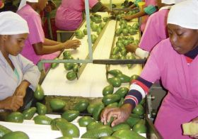 Avos highlighted as economic strongpoint