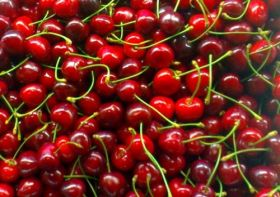 Poor weather cuts Italian cherry crop