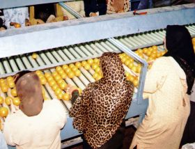 Egyptian citrus may re-enter US