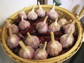 Peru records garlic success