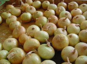 Shift in Onions New Zealand's focus