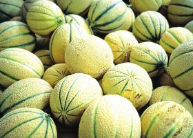 Favourable melon season ahead