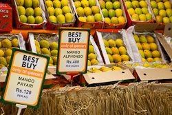 New Australian hope for Indian mangoes