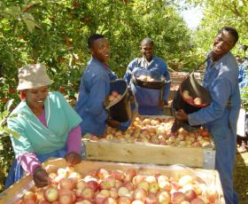 South Africans establish 'Fruit Desk'