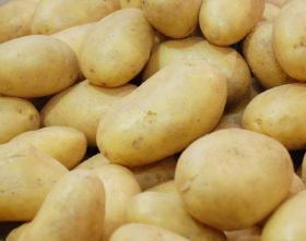 North American potato production drops