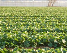 Toshiba turning to IT farming