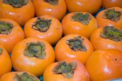 High hopes for Spanish persimmon