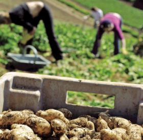 Scotland to host World Potato Congress