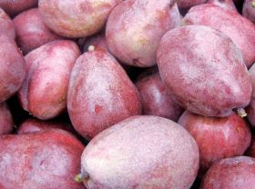 Industry expects large NW pear crop