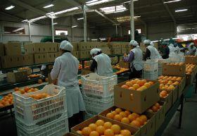 Peruvian citrus closes in on Thailand