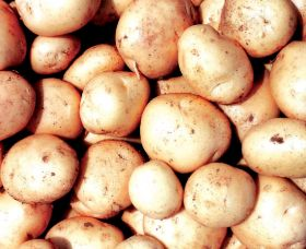 USDA proposes Mexico potato entry