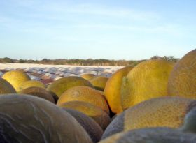 Brazil greenlights watermelon tech