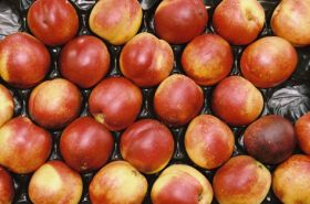 Australian nectarines win access to China