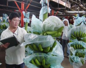 Philippine bananas take step closer to US