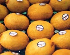 Chilean kiwifruit in strong demand