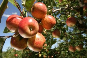 AFFCO supports young fruit growers
