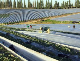 Sharp fall in Israel's fruit export turnover