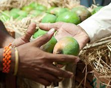 New mango orders for Uttar Pradesh