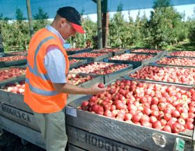 Slight upturn for NZ apple industry predicted