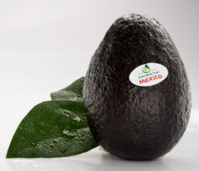Sharp rise in Michoacán avocado exports