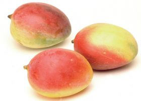 Perfection Fresh trials Israeli mangoes