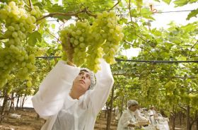 Bayer defends Monsanto deal