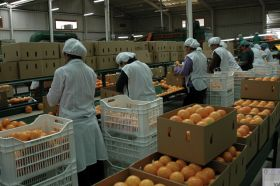 Peru closes in on Japanese citrus market