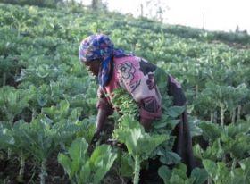 New report favours organic farming