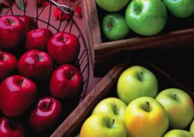US apple crop expected to fall