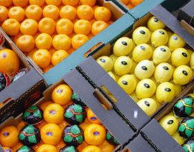 Saudi Arabia celebrates Turkish citrus