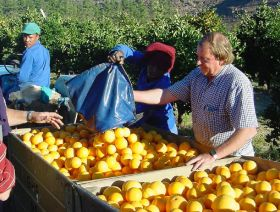 Citrus production to rise in South Africa