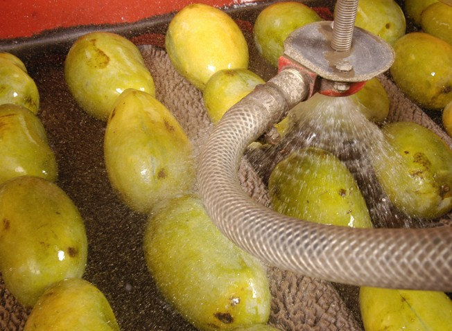 Mexican exotic fruit to debut in US