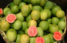 US gives green light to irradiated guavas