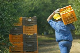 Lack of pickers threatens Spain's citrus harvest