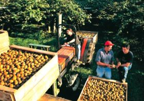 New Zealand fruit industries align