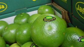Early citrus season for Agrexco