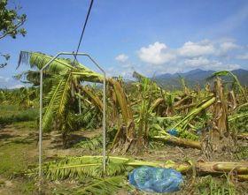 Weather key to future JP banana exports