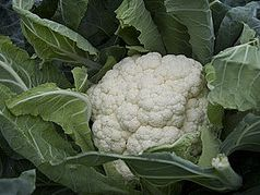 Brassica sales primed for good growth