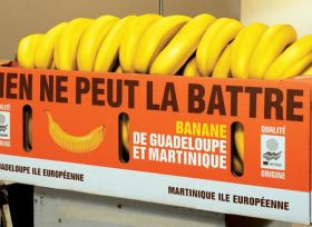 European banana producers state case