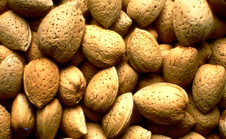 Indian almond imports to grow - Growing french walnuts for a profit ...