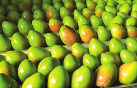 New benchmark for Indian mangoes