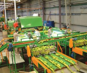 Argentine produce exports slump