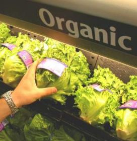 Canadians have a taste for organics