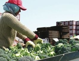 Late start triggers veg shortage