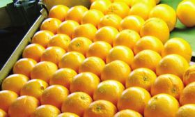 Australian oranges on an upward curve