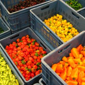 Dutch pepper promotion receives EC funding